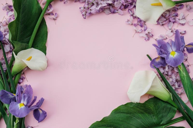 Flat lay composition with wisteria, irises, white callas on pink. Background. top view stock photos
