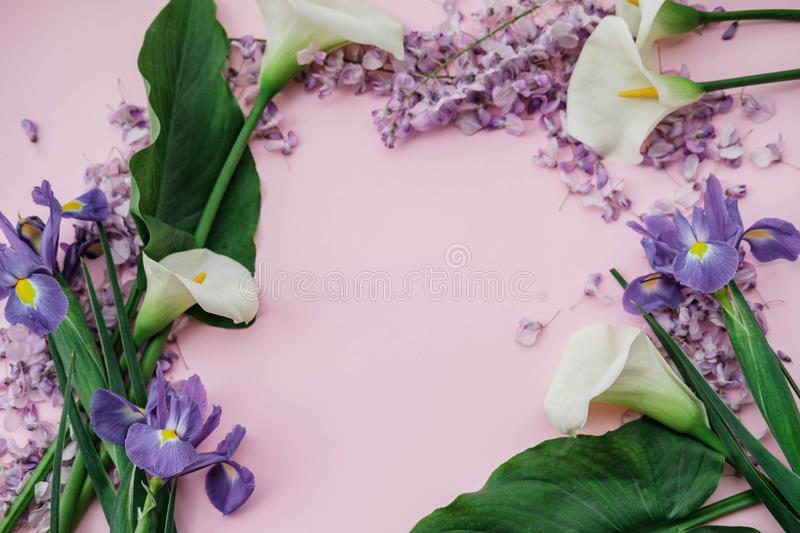 Flat lay composition with wisteria, irises, white callas on pink. Background. top view royalty free stock photos