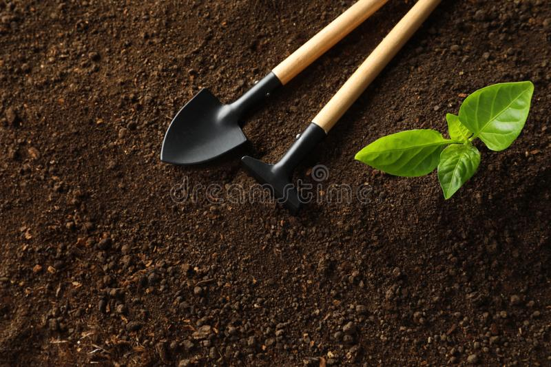 Flat lay composition with young plant and gardening tools on fertile soil royalty free stock photography