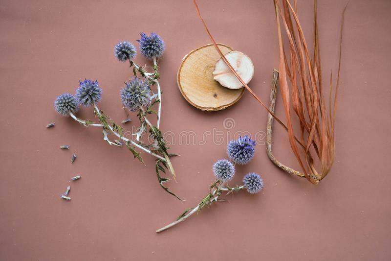 Flat lay eryngium planum, dry palm, wood slice on pink stock photo