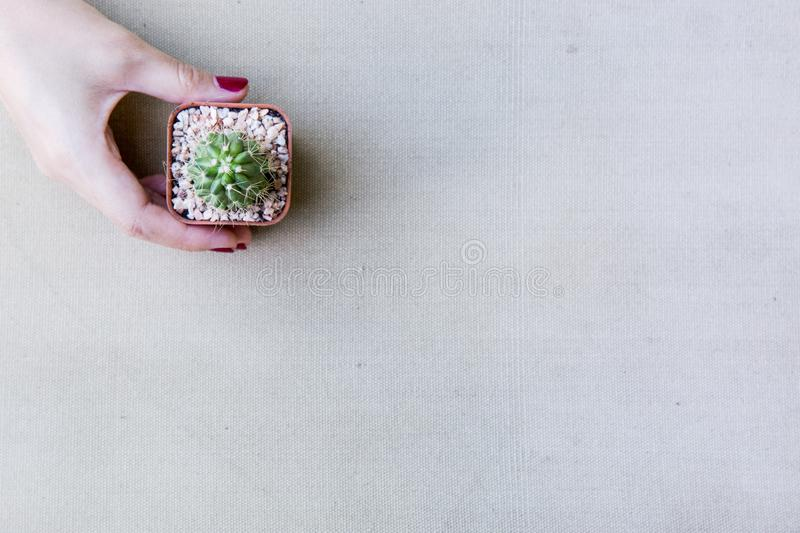 Flat lay of female hand holding a small catus stock photo