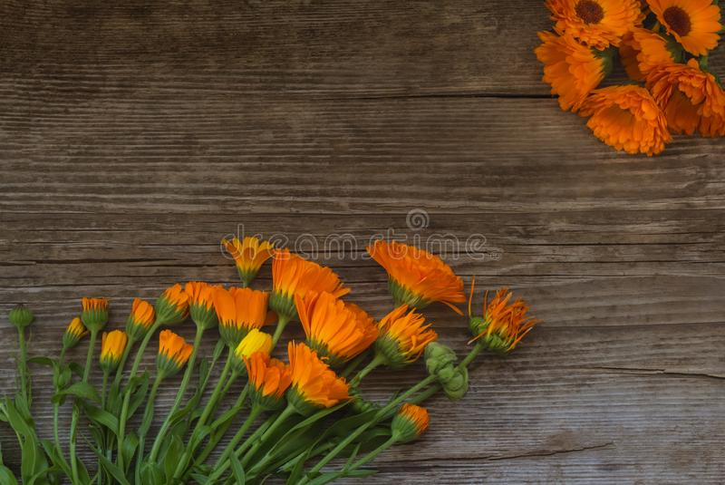 Flat lay, flowers with bugs and calendula seeds on wooden background in order of withering reach for the improvised sun.  royalty free stock images