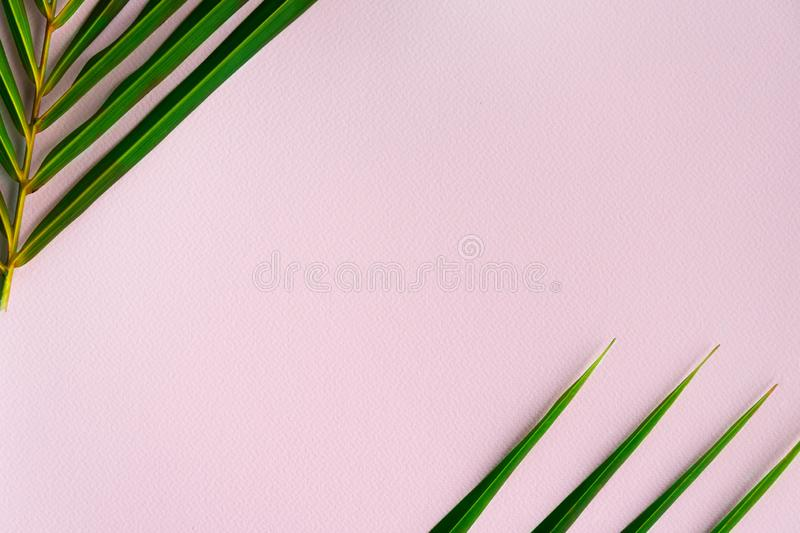Frame of green leaf of summer coconut palm tree on pastel pink paper travel vacation background stock images