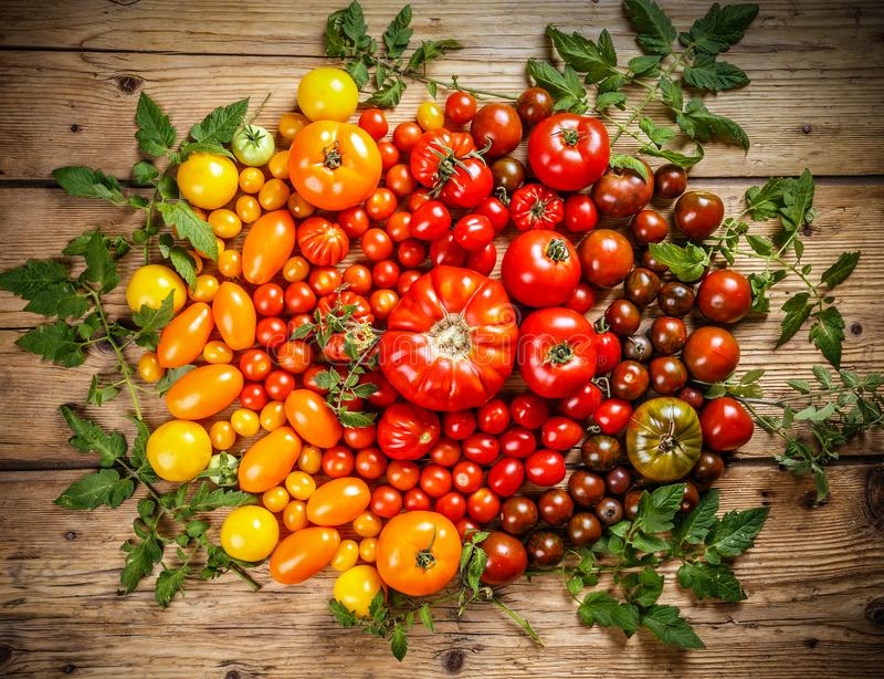 Flat-lay of fresh colorful ripe tomatoes royalty free stock photo