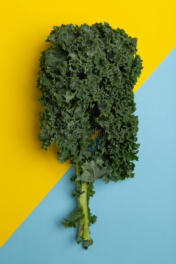 Flat lay fresh green kale. Flat lay fresh green curly kale on yellow and blue background top view stock photography