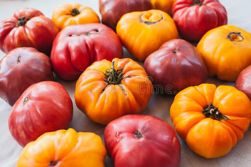 Flat lay of fresh yellow and red reipened heirloom tomatoes on white background. Fresh vegetables. Healthy nutrition concept. royalty free stock photos