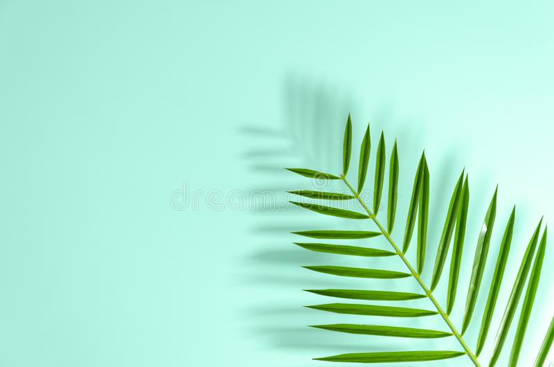 Flat lay green leaf of palm tree closeup with hard shadows. Copy space text or flyer.  stock photo