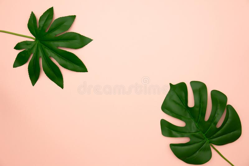 Flat lay of green tropical leaves royalty free stock photo