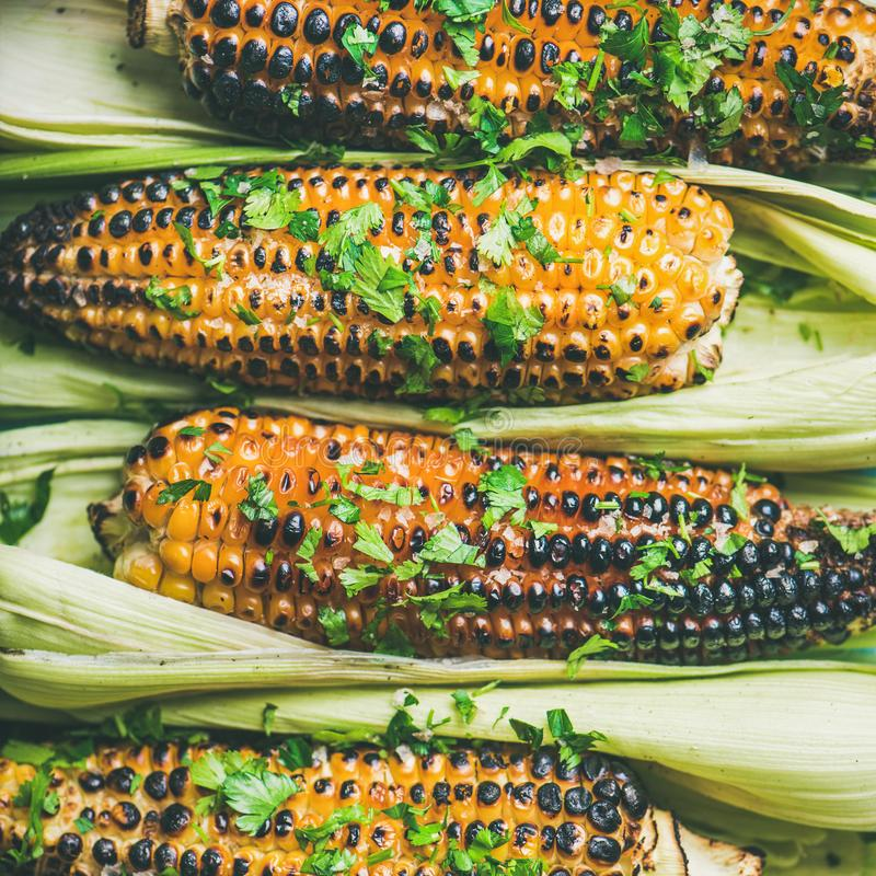 Flat-lay of grilled sweet corn with spices and herb, close-up stock photography