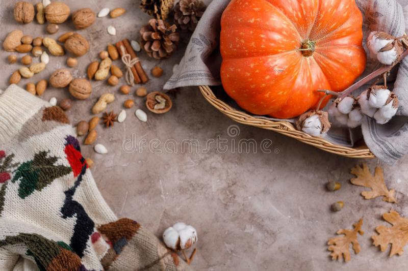 Flat lay in pastel colors lifestyle a warm sweater, dry leaves, acorns,pumpkin. stock photos