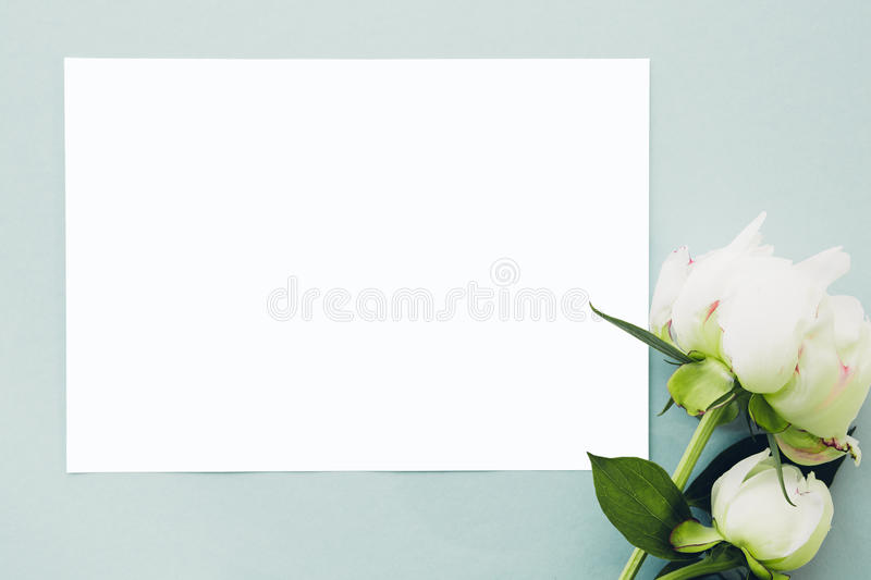 Flat lay Peonies flowers and blank white sheet on blue background, top view. mock up stock photo