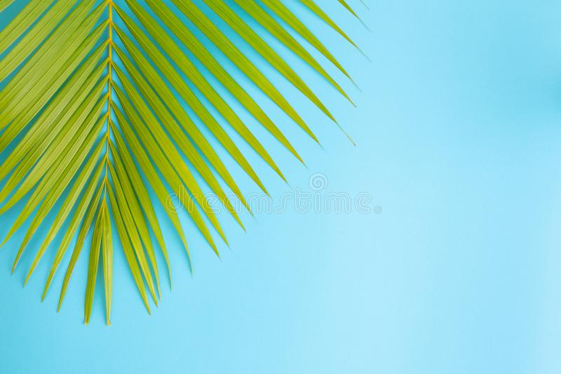 Flat lay photo coconut leaf on blue background , top view and copy space for montage your product stock photo
