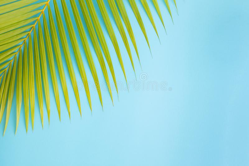 Flat lay photo coconut leaf on blue background , top view and copy space for montage your product stock photography