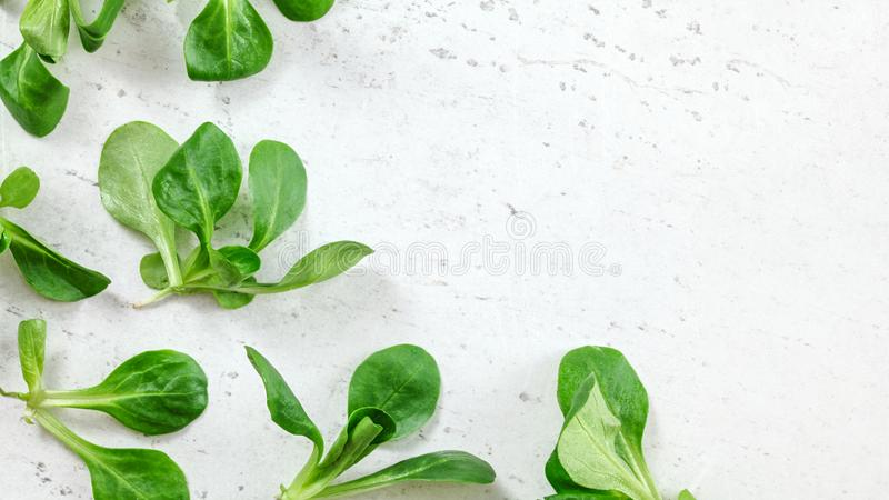 Flat lay photo - corn salad Valerianella locusta green leaves on white working board, space for text on right side stock photo