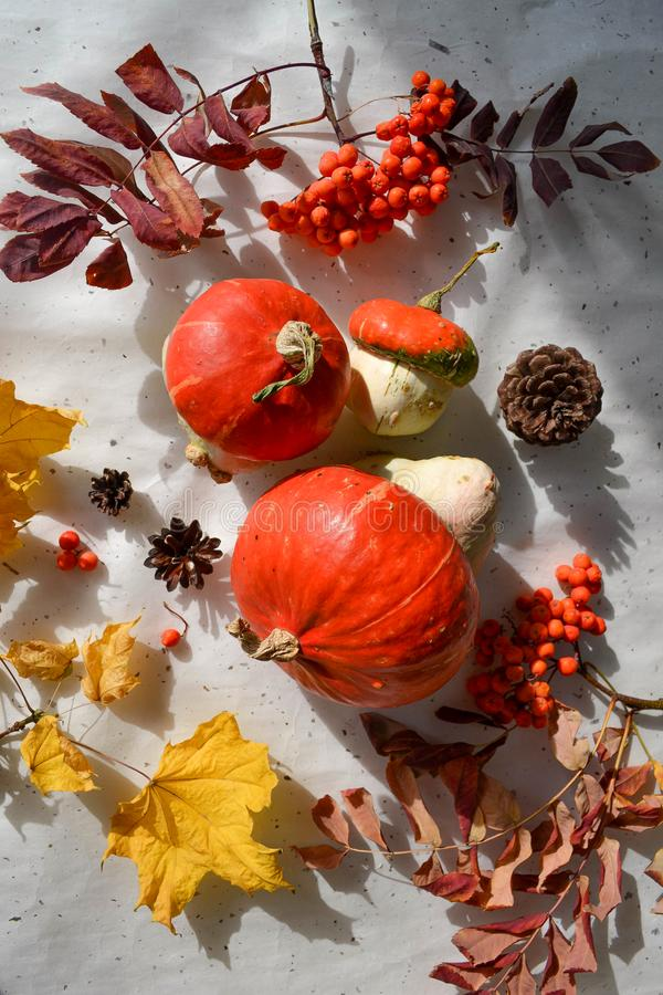 Flat lay photo. Fall pumpkin harvest on hand made rice paper royalty free stock photography