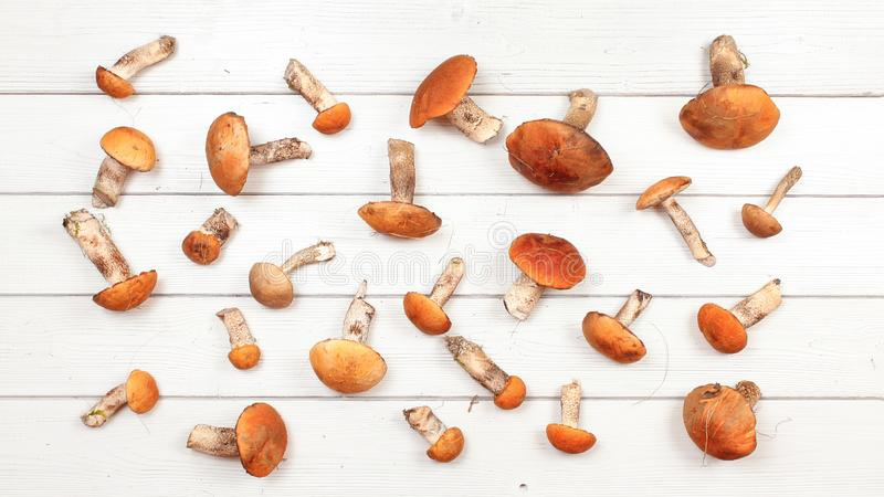 Flat lay photo - freshly harvested forest mushrooms, red-capped scaber stalk variety Leccinum aurantiacum / albostipitatum, on. White boards desk royalty free stock photo