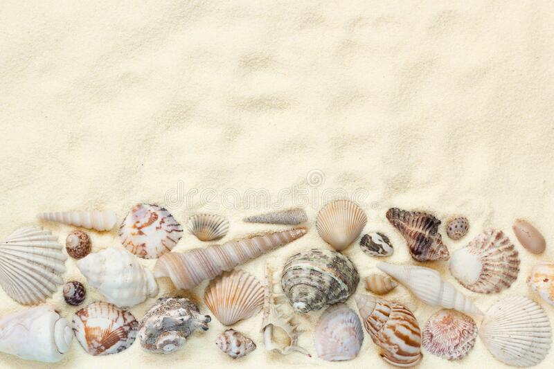 Flat lay of seashells on white sand background, concept of beach vacation, top view with copy space. Flat lay of seashells on white sand background, concept of stock images