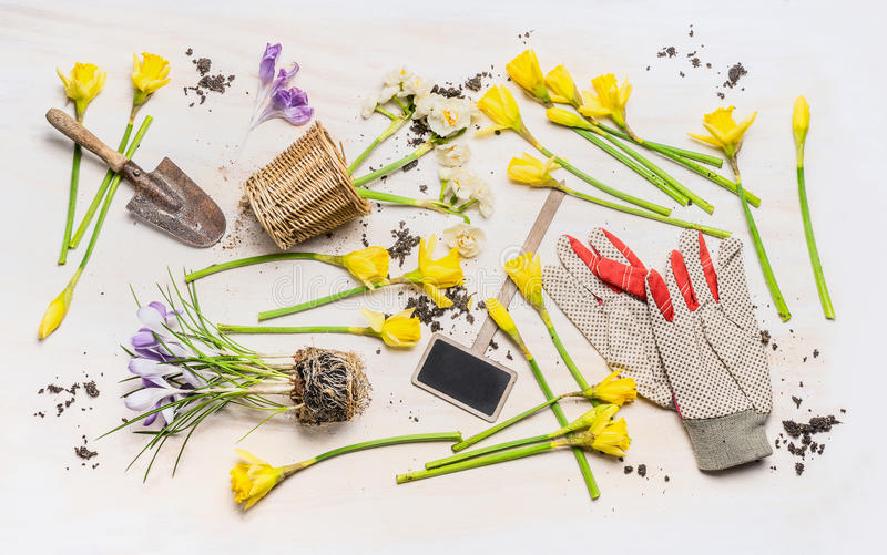 Flat lay with spring flowers, various garden tools: plant sign , shovel , pot and work gloves on white wooden background, top vi. Ew. Gardening concept stock image