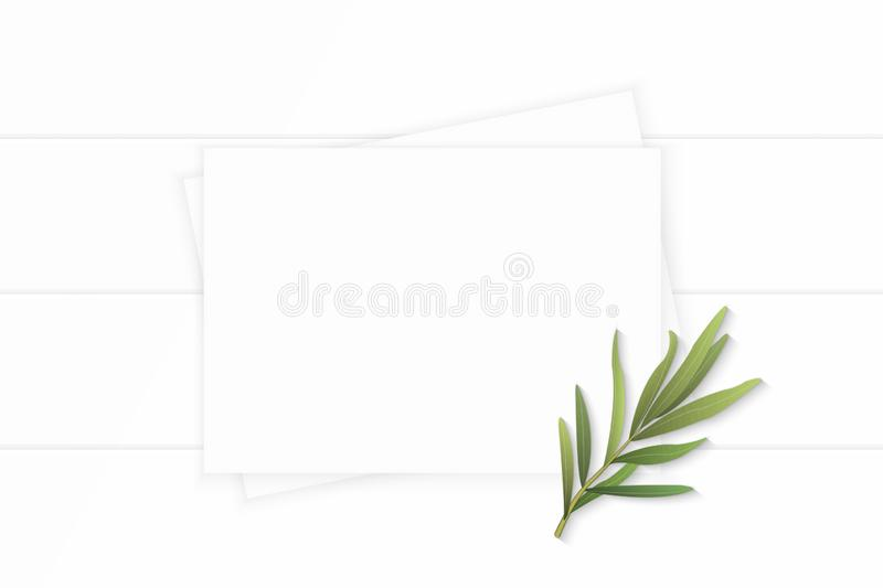 Flat lay top view elegant white composition paper plant tarragon leaf on wooden background. A Flat lay top view elegant white composition paper plant tarragon royalty free stock photos