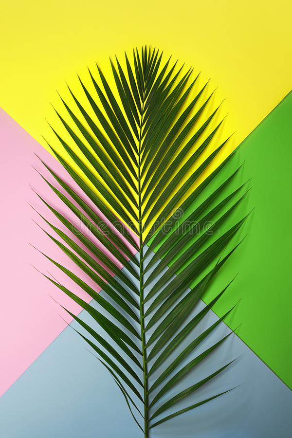 Top view tropical green palm leaf on colorful yellow pink blue green background. Nature concept. flat lay, close up. Travel stock images