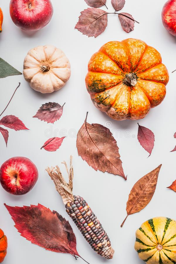 Flat lay of various colorful pumpkin, apples and fall leaves on white table background, top view. Autumn composing or pattern bac royalty free stock photo
