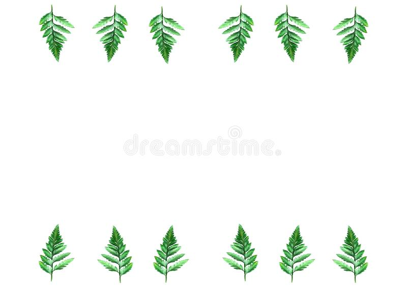 Flat lay on white background for text and fern leaves, top view, space for text, copy space, royalty free stock photography