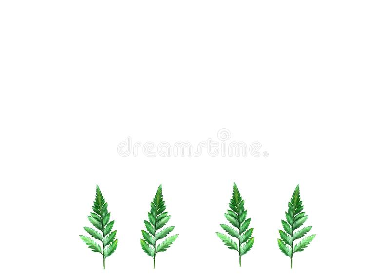 Flat lay on white background for text and fern leaves, top view, space for text, copy space, royalty free stock photos