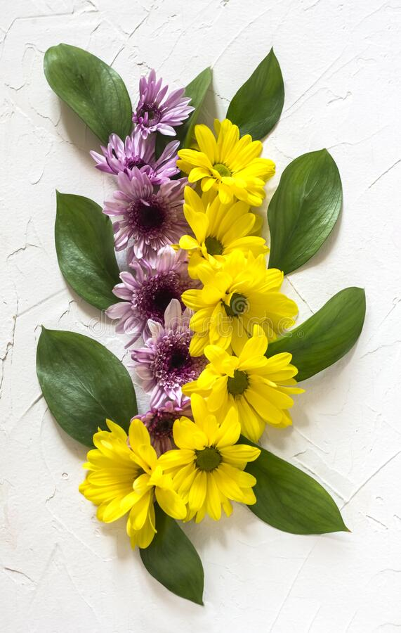 Flat lay yellow and purple chrysanthemum flowers with green leaves.  stock photo