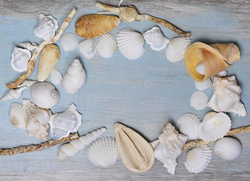 Shells found at beach on old table stock photos
