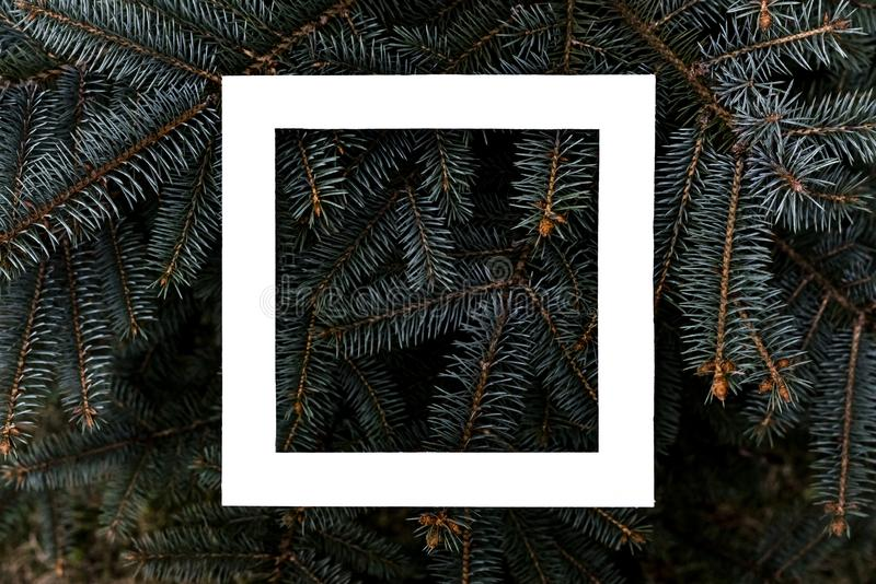 Flat layout of dark moody pine tree pattern with a white square frame creative design concept f. Flat layout of dark moody pine tree pattern with a white square royalty free stock photography
