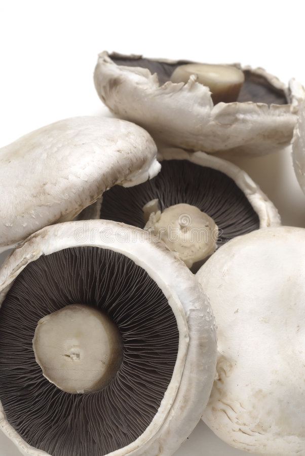 Flat mushrooms. A pile of flat mushrooms on white. See all my food & drink images here stock images