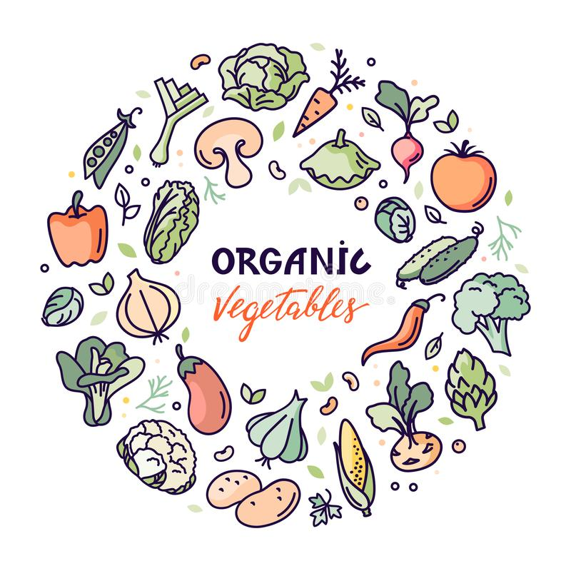 Flat organic vegetables vector illustration with a place for text or lettering. royalty free illustration