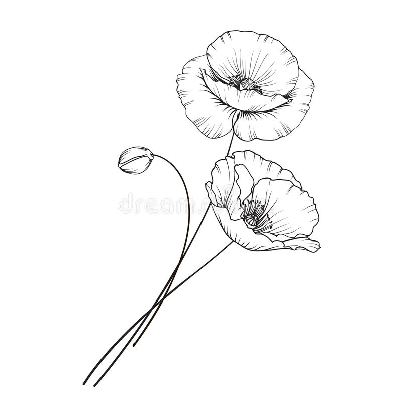 Flat single poppy. royalty free illustration