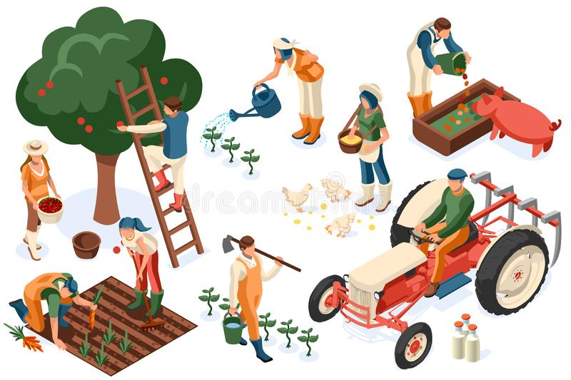 Flat Tractor Set Farmer Tractor Agricultural. Flat tractor set. Farmer, agricultural worker with plant, chicken, sheep, rabbit, cow, milk, fruit or feeding farm stock illustration