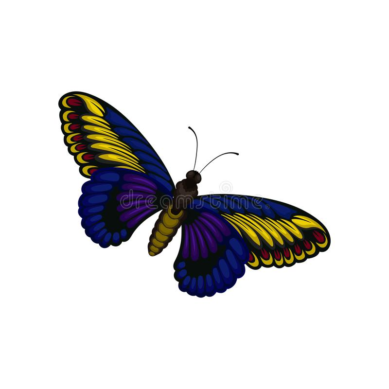 Flat vector of bright blue-yellow butterfly. Flying insect with two pairs of wings with beautiful pattern. Nature theme. Illustration of bright blue-yellow royalty free illustration