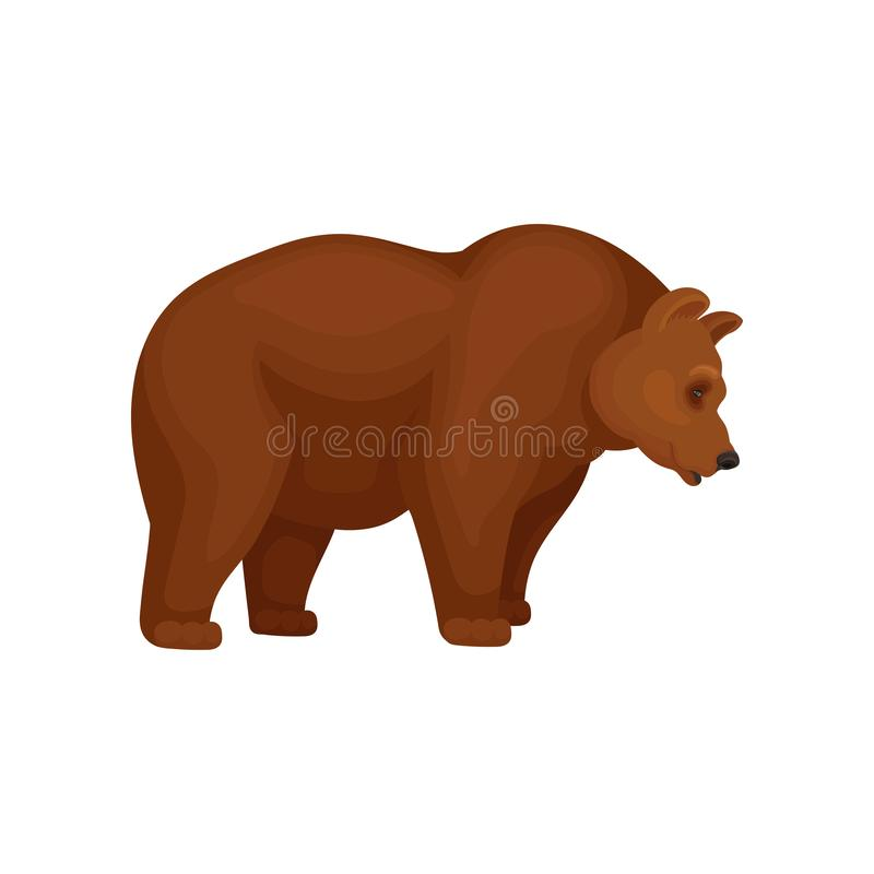 Flat vector icon of big bear with brown fur, side view. Cartoon character of large mammal animal royalty free illustration
