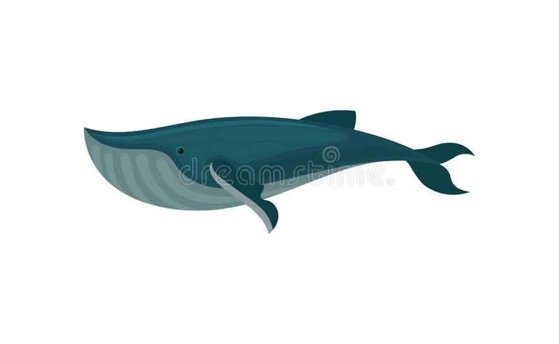 Flat vector icon of blue whale. Large marine mammal. Sea animal. Element for children book or mobile game vector illustration