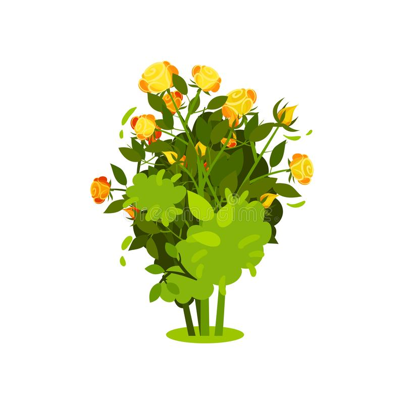 Flat vector icon of bush with bright yellow-orange roses and green leaves. Shrub with beautiful flowers. Garden plant. Icon of bush with bright yellow-orange vector illustration