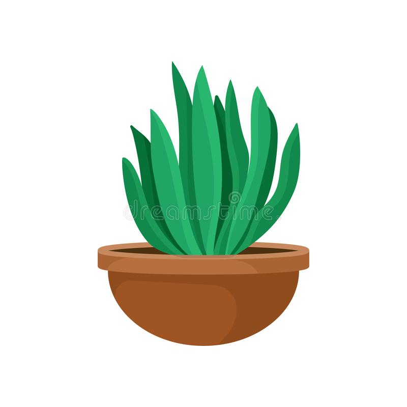 Flat vector icon of cactus with green leaves in brown ceramic pot. Small decorative houseplant. Indoor gardening theme vector illustration