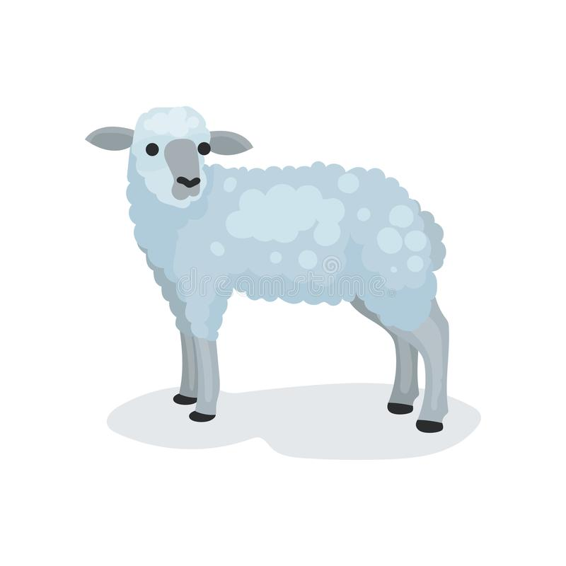 Flat vector icon of cute gray lamb. Small domestic sheep. Biblical and Christian sacrificial animal. Religious symbol royalty free illustration