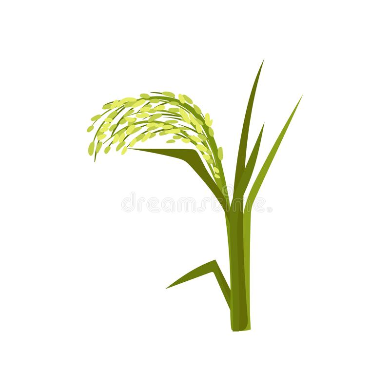 Flat vector icon of green millet. Fast-growing cereal plant. Grain culture. Organic product. Agricultural crop. Illustration of green millet. Fast-growing cereal royalty free illustration
