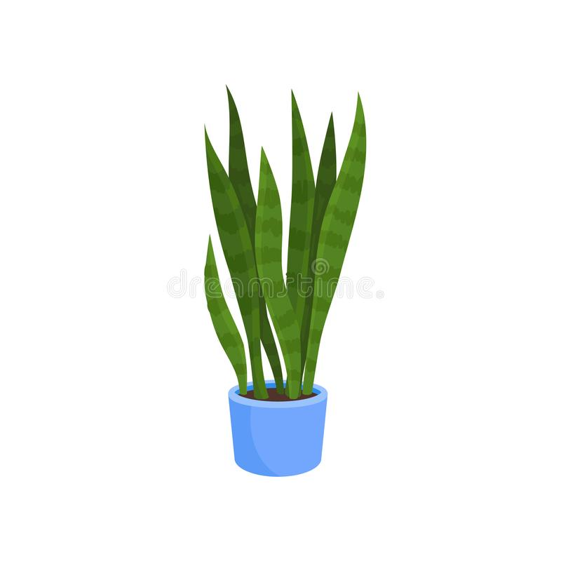 Flat vector icon of sansevieria trifasciata or snake plant in blue pot. Decorative houseplant with long bright green stock illustration