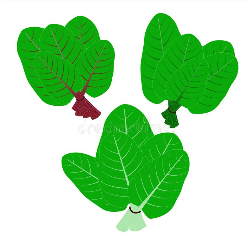 Flat vector icons. Leafy green vegetable.Organic and healty food. Three similar groups of leafy green vegetables on a white background, isolated royalty free illustration