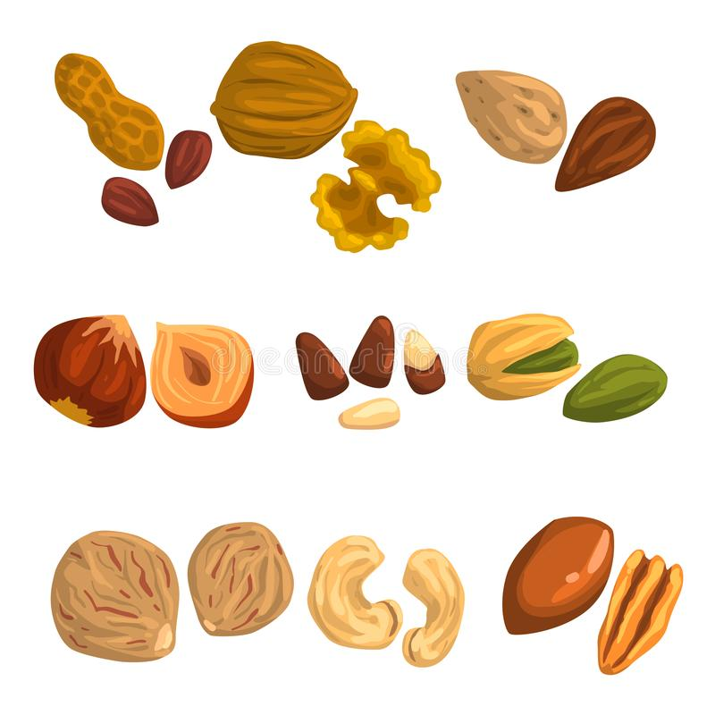 Flat vector icons of nuts and seeds. Hazelnut, pistachio, cashew, nutmeg, walnut, brazil nut, pecan, peanut and almond vector illustration
