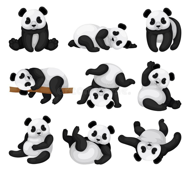 Flat vector set of adorable panda in different poses. Funny bamboo bear. Exotic animal vector illustration