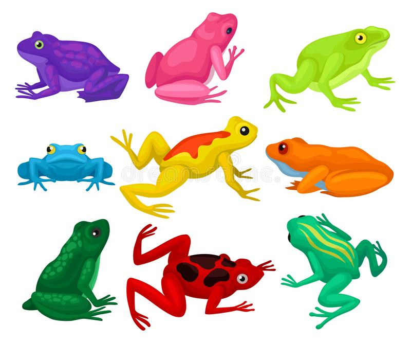 Flat vector set of cartoon frogs. Toads with short squat body, colorful smooth skin and long hind legs. Set of cartoon frogs. Toads with short squat body stock illustration