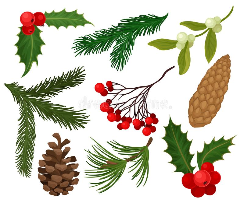 Flat vector set of Christmas plants. Holiday symbols. Holly berries, pine or fir cones, branch of mistletoe and. Set of Christmas plants. Traditional holiday royalty free illustration