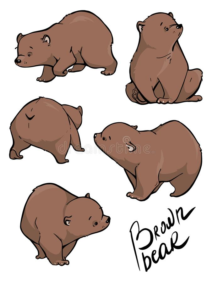 Flat vector set of large bear in different poses. Wild forest creature with brown fur. Cartoon character of big mammal animal royalty free illustration