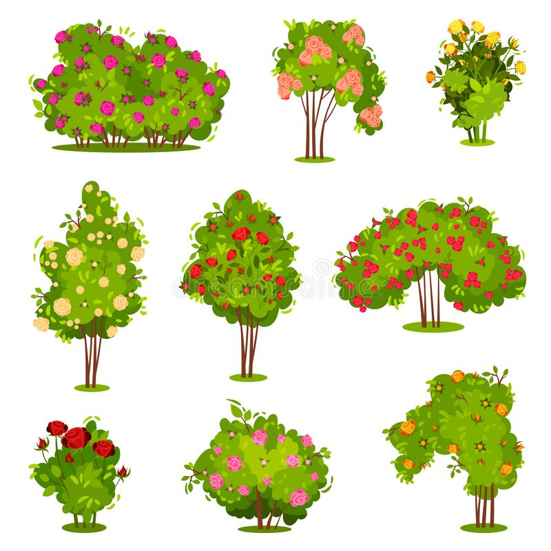 Flat vector set of roses bushes. Green shrubs with beautiful flowers. Garden plants. Natural landscape elements stock illustration