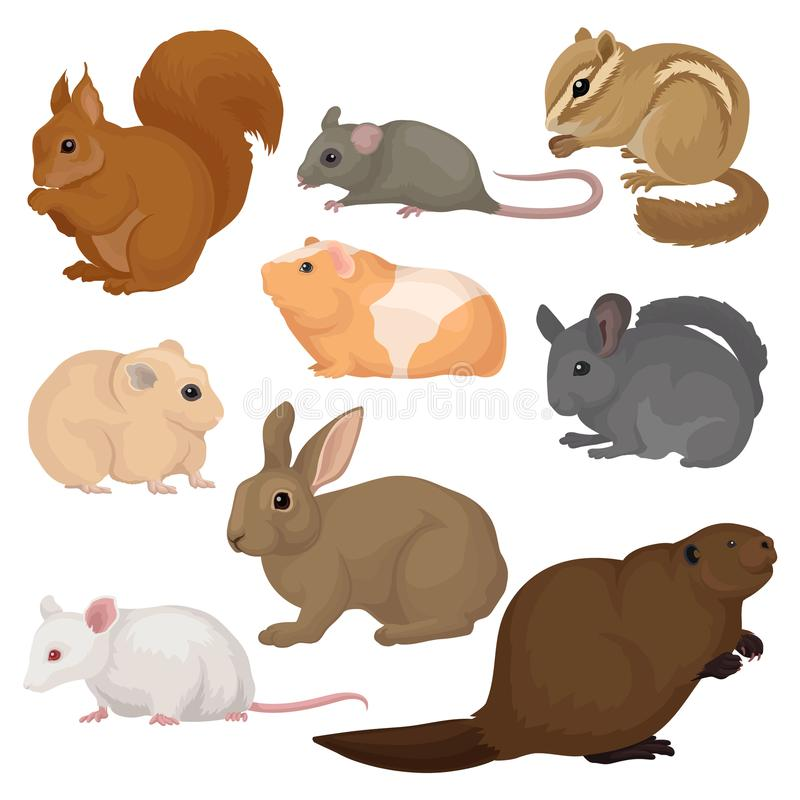 Flat vector set of various rodents. Small forest and domestic animals. Mammal creatures. Fauna and wildlife theme. Set of various rodents. Small forest and royalty free illustration